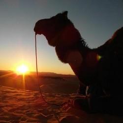 2 days to zagora marrakech